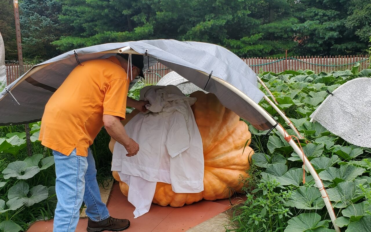 Bob Liggett with his giant pumpkin